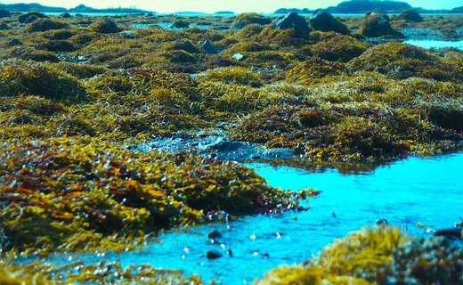Liaf 2019 intertidal zone photo trygve luktvasslimo